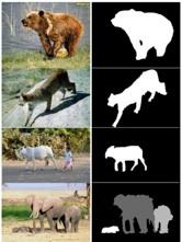 Animal detection dataset